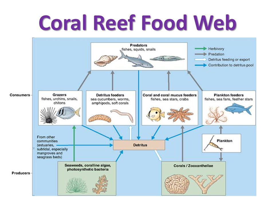 Coral Reef Food Web