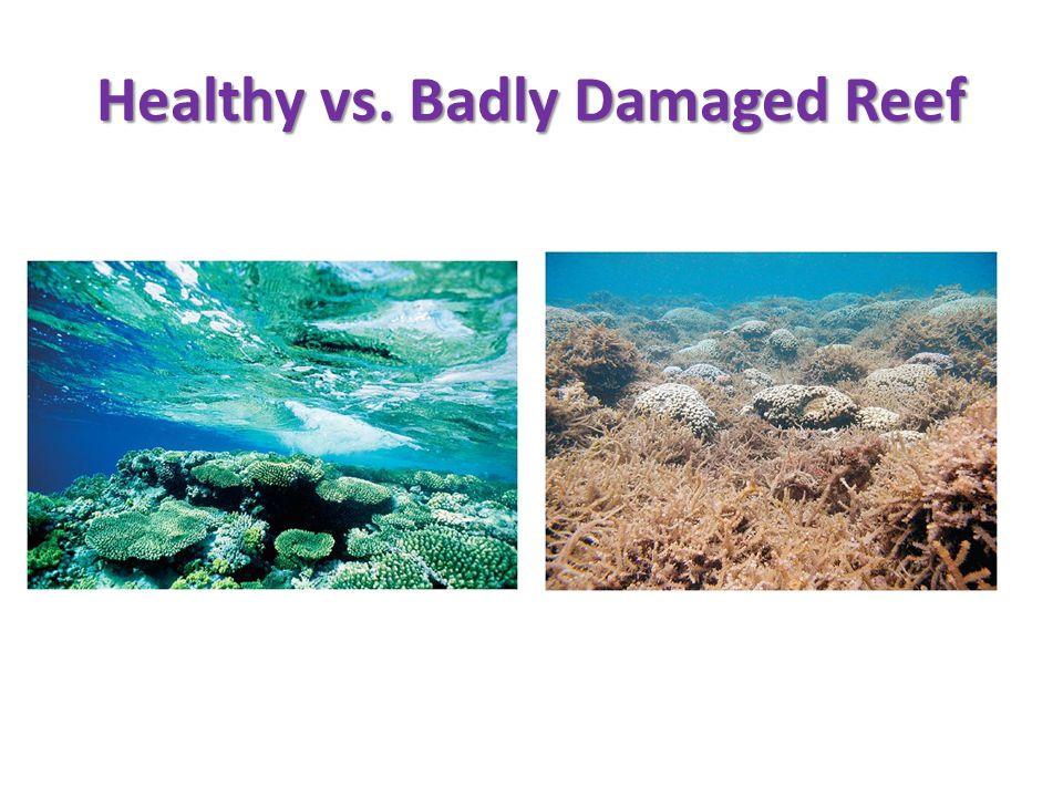 Healthy vs. Badly Damaged Reef