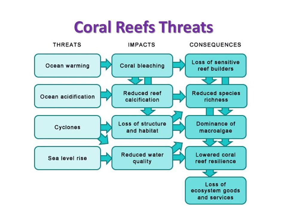 Coral Reefs Threats