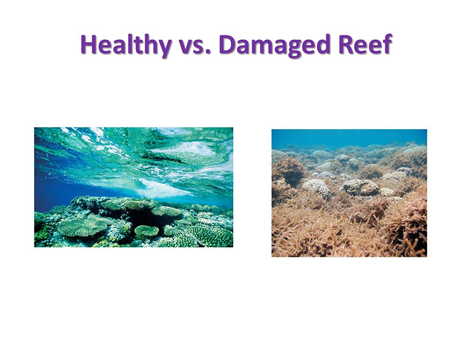 Healthy vs. Damaged Reef
