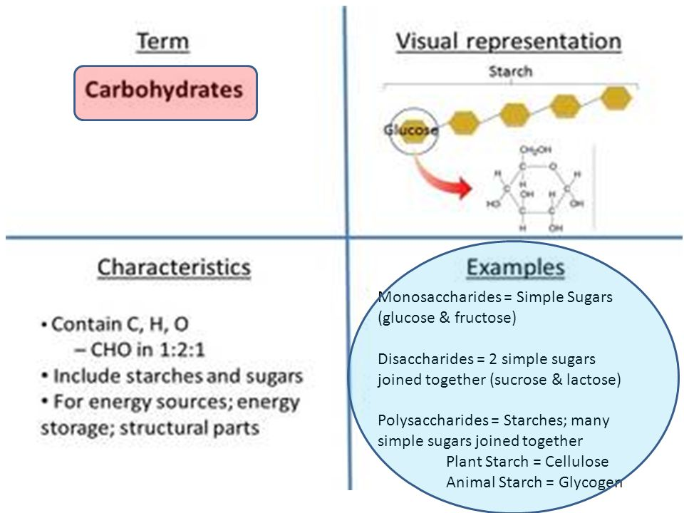 Monosaccharides = Simple Sugars (glucose & fructose)