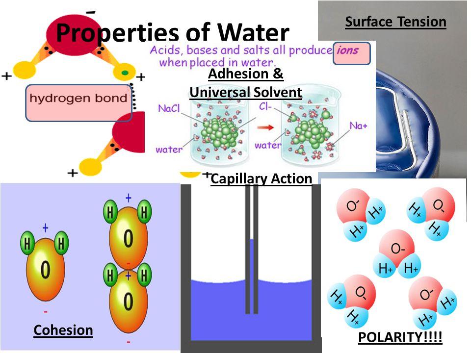Adhesion & Universal Solvent