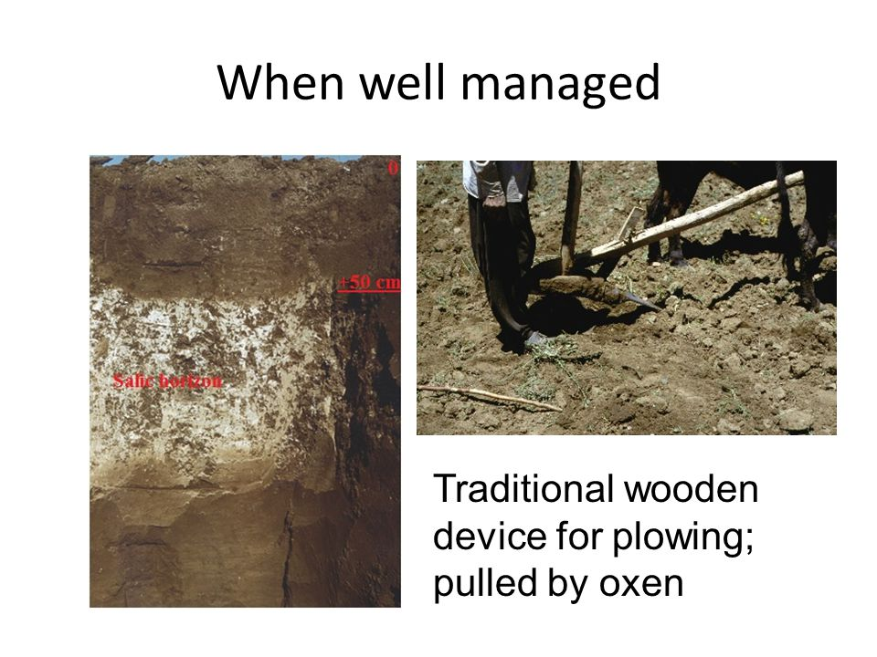 When well managed Traditional wooden device for plowing; pulled by oxen