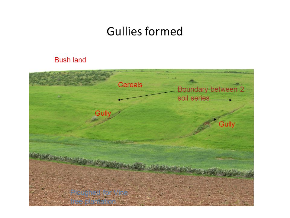 Gullies formed Bush land Cereals Boundary between 2 soil series Gully