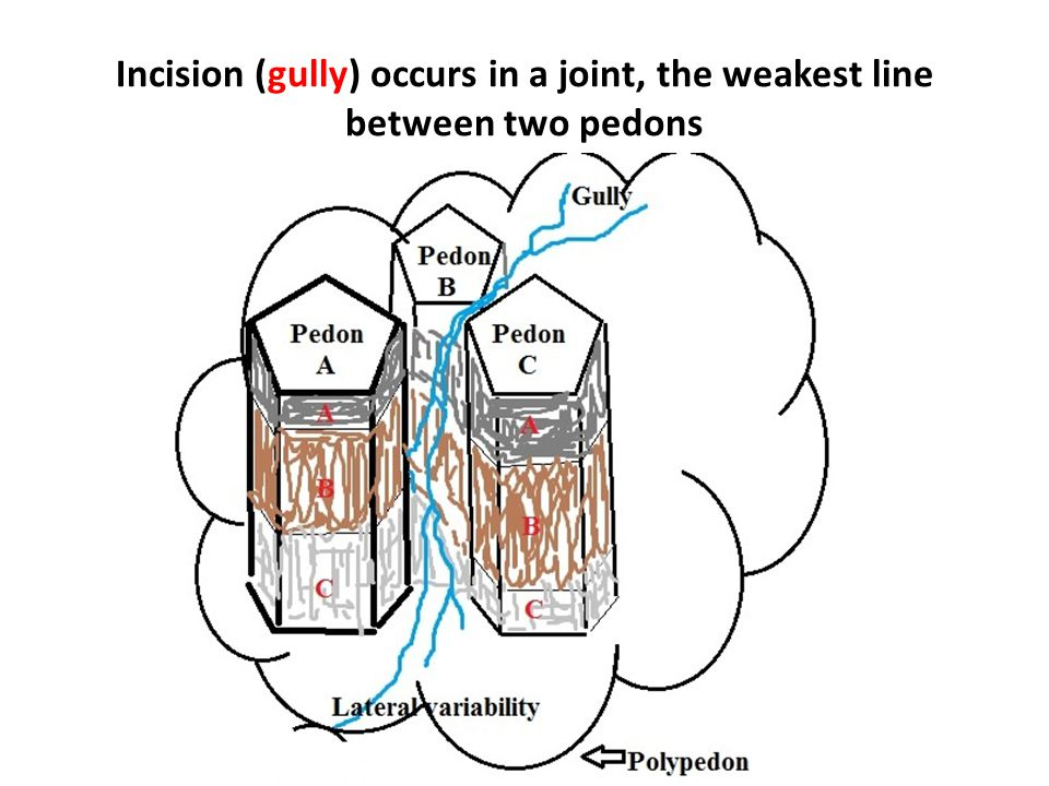 Incision (gully) occurs in a joint, the weakest line between two pedons