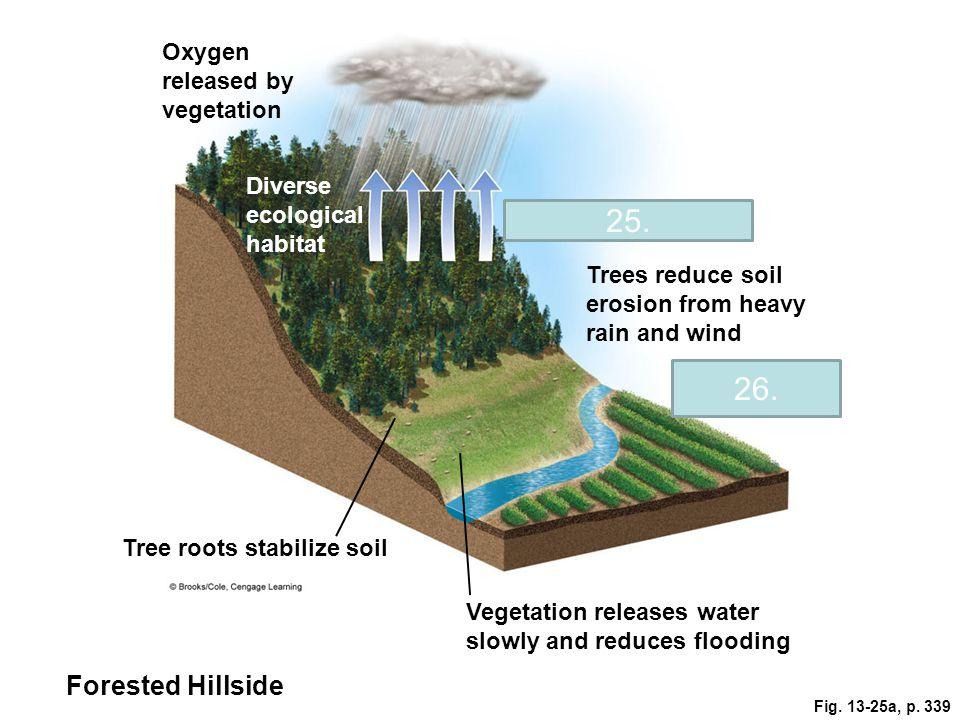 25. 26. Forested Hillside Oxygen released by vegetation