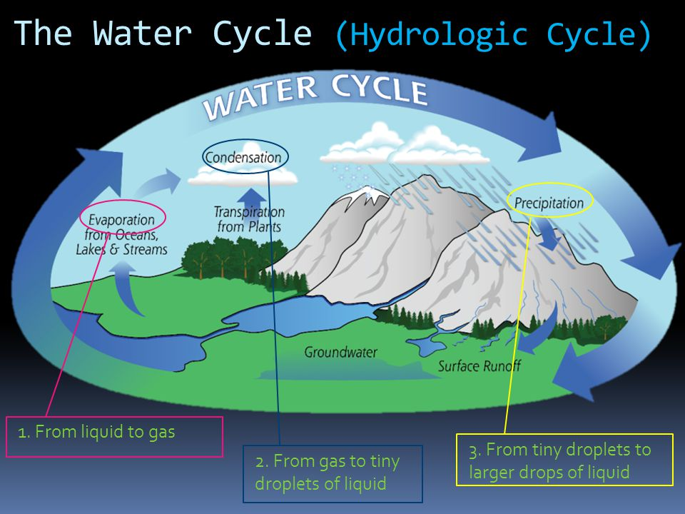The Water Cycle (Hydrologic Cycle)