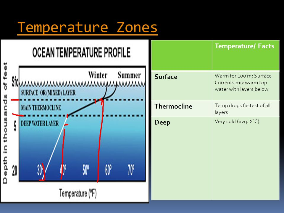 Temperature Zones Temperature/ Facts Surface Thermocline Deep