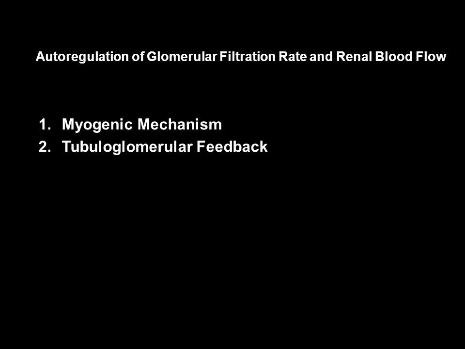 Tubuloglomerular Feedback