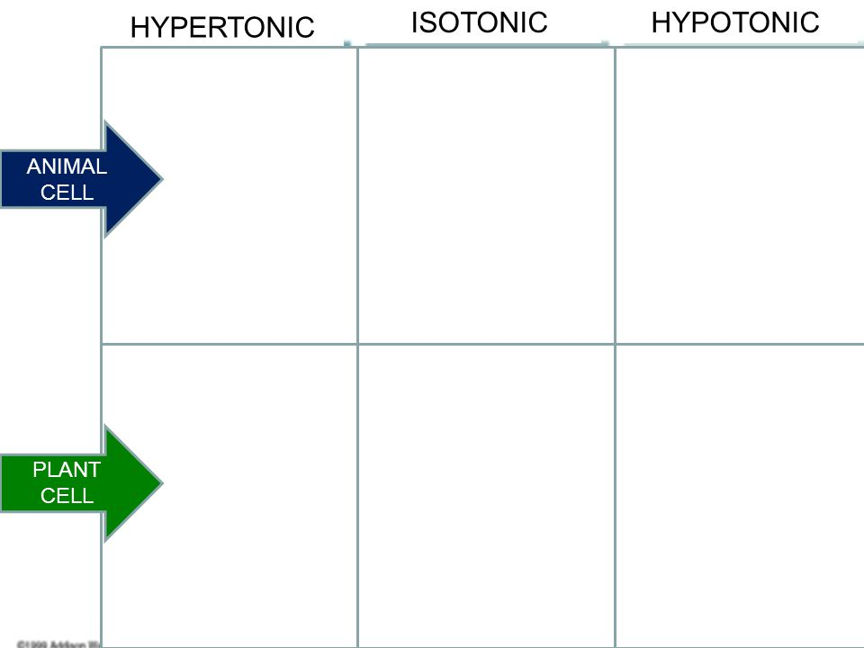 HYPERTONIC ISOTONIC HYPOTONIC Shriveled Normal Lysed Flaccid Turgid