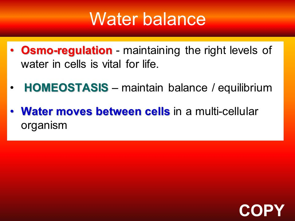 Water balance COPY Why is OSMOSIS important for living organisms
