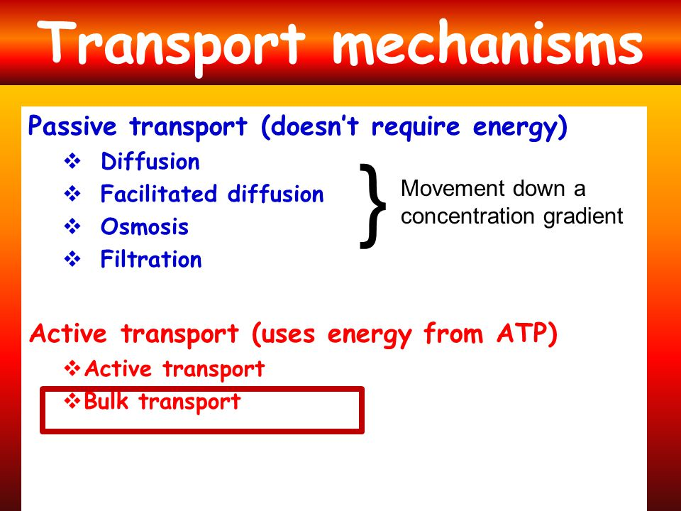 } Transport mechanisms Passive transport (doesn't require energy)