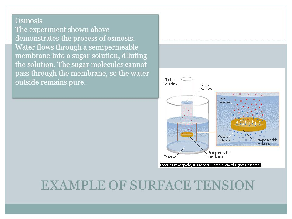 EXAMPLE OF SURFACE TENSION