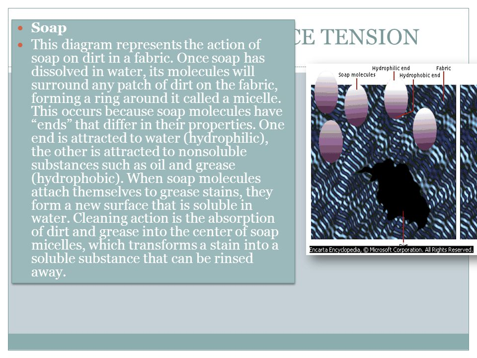 EXAMPLES OF SURFACE TENSION