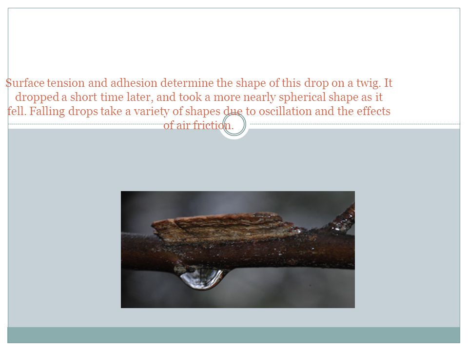 Surface tension and adhesion determine the shape of this drop on a twig.