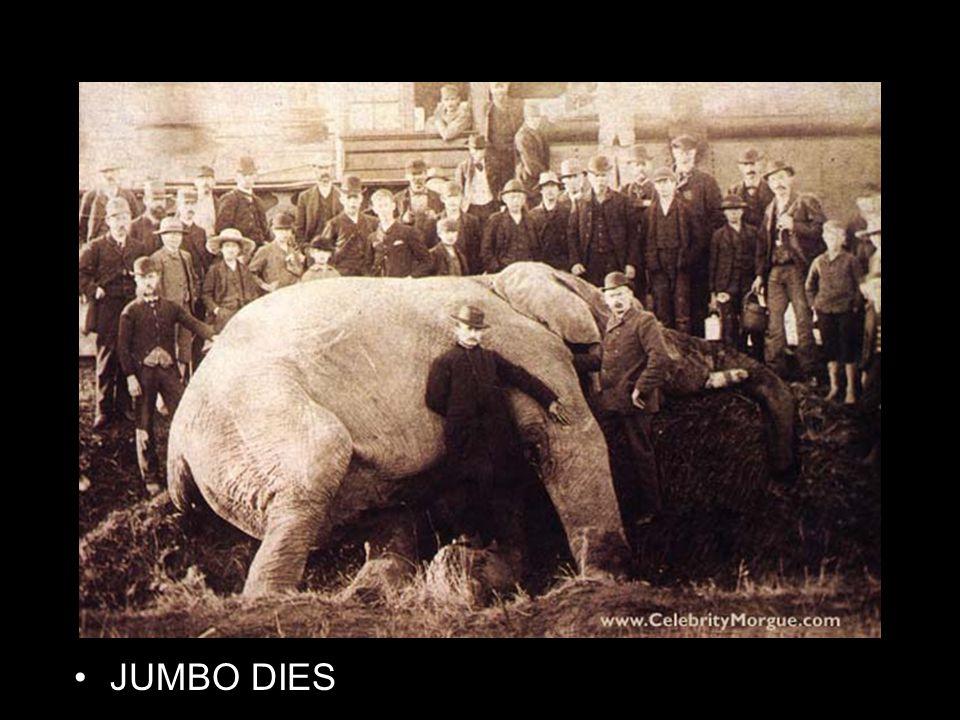 JUMBO DIES http://www.roadsideamerica.com/pet/jumbo.html Dead jumbo: http://www.celebritymorgue.com/jumbo/