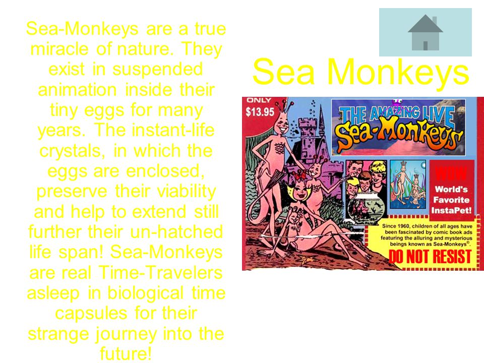 Sea-Monkeys are a true miracle of nature