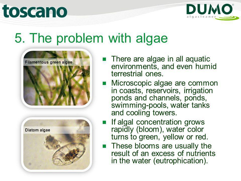 5. The problem with algae There are algae in all aquatic environments, and even humid terrestrial ones.