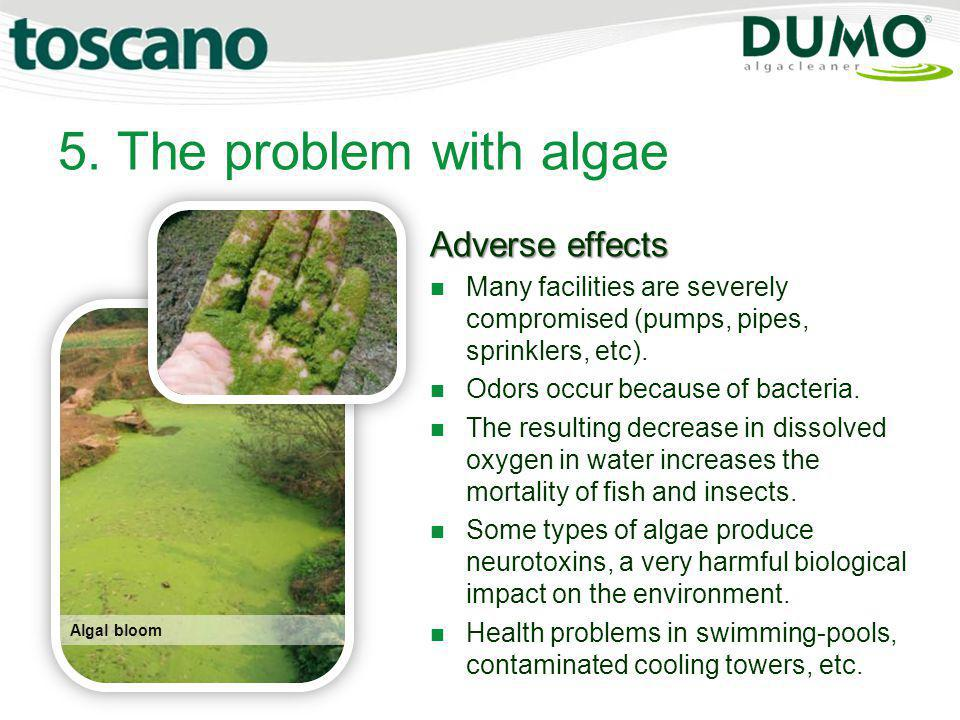 5. The problem with algae Adverse effects