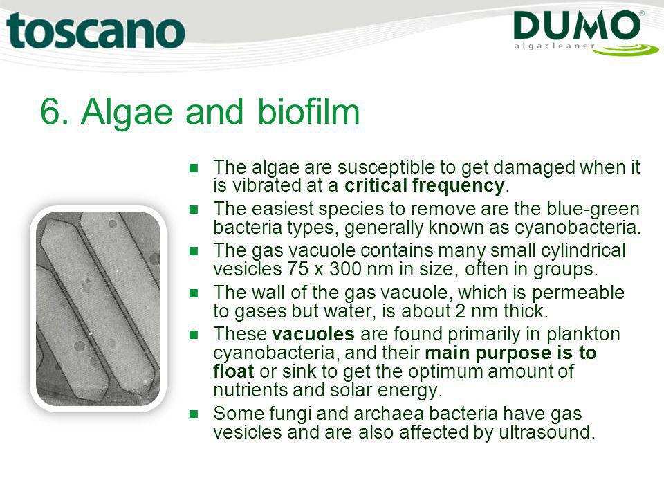 6. Algae and biofilm The algae are susceptible to get damaged when it is vibrated at a critical frequency.