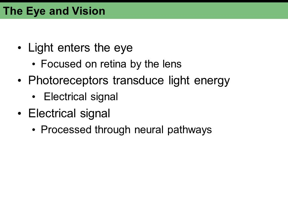Photoreceptors transduce light energy