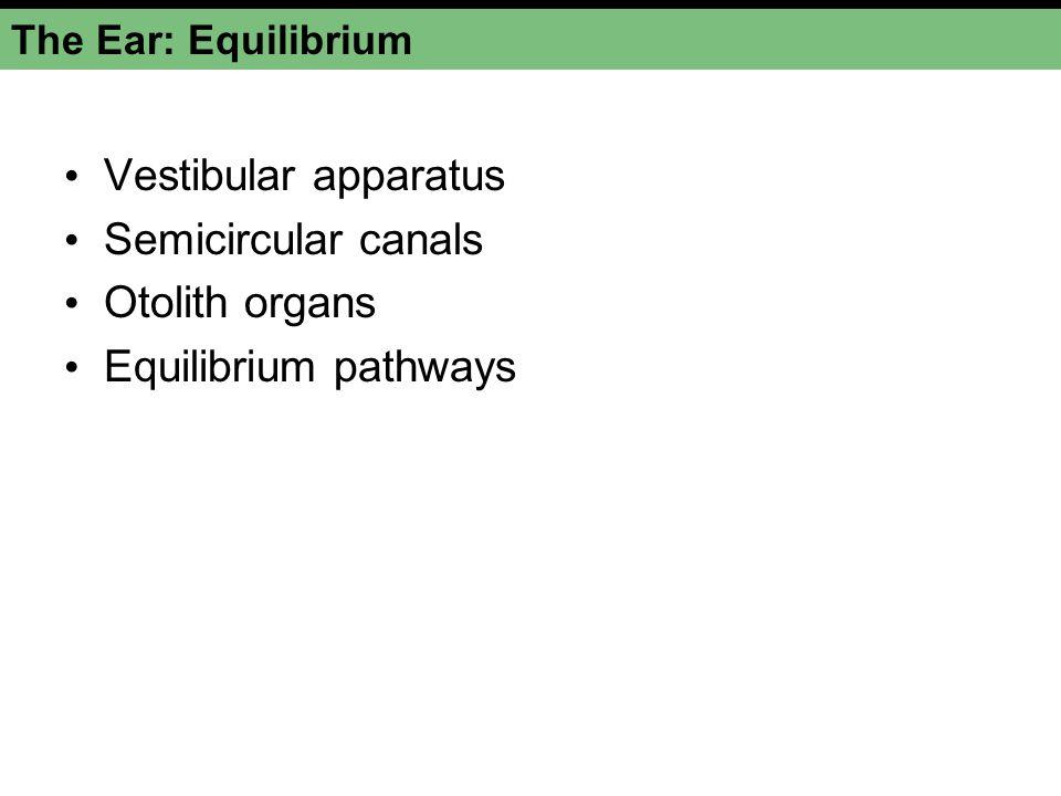 Vestibular apparatus Semicircular canals Otolith organs