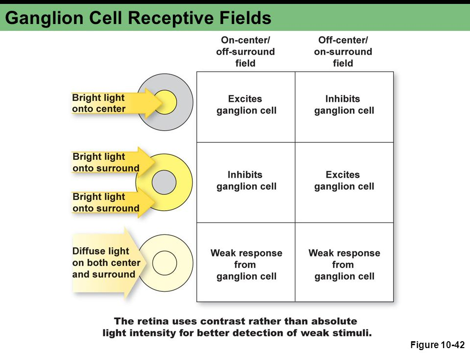 Ganglion Cell Receptive Fields