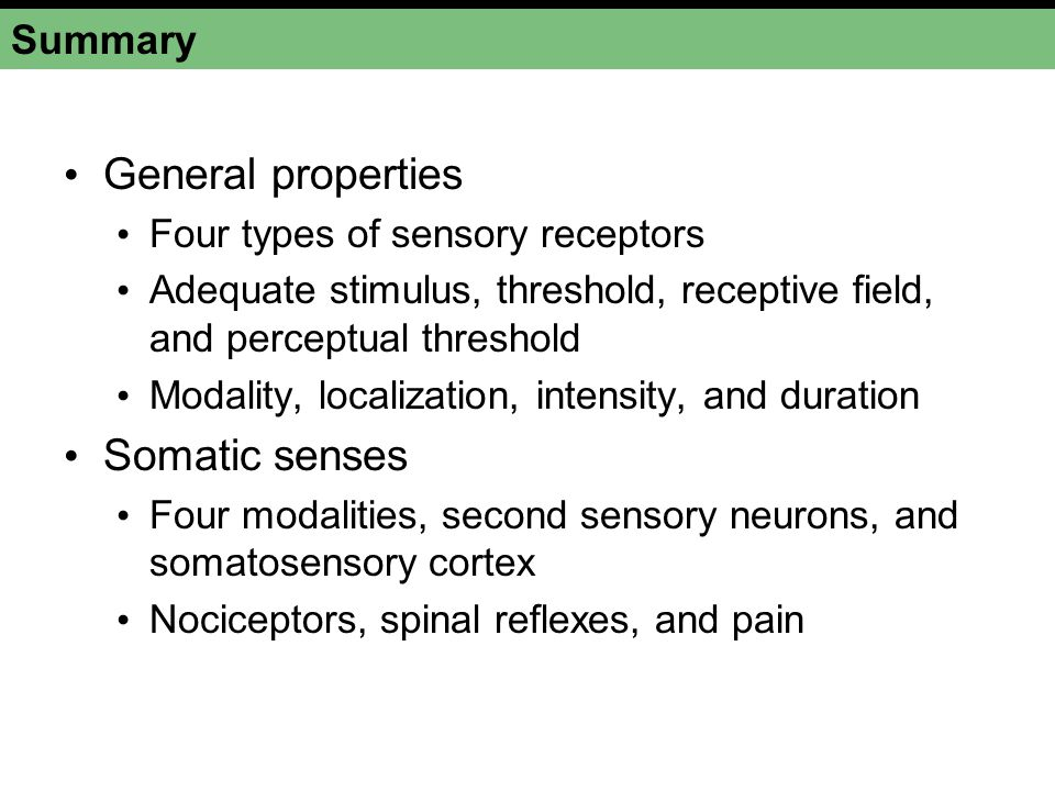 General properties Somatic senses Summary