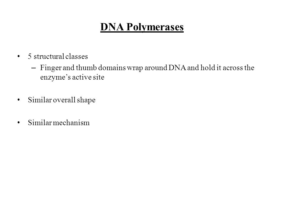 DNA Polymerases 5 structural classes