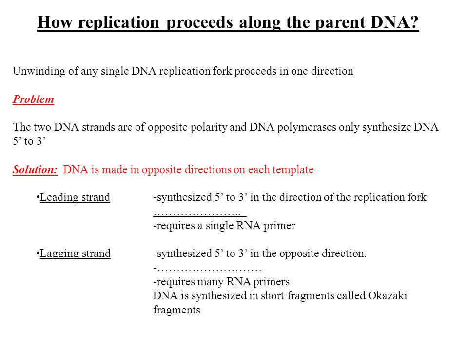 How replication proceeds along the parent DNA