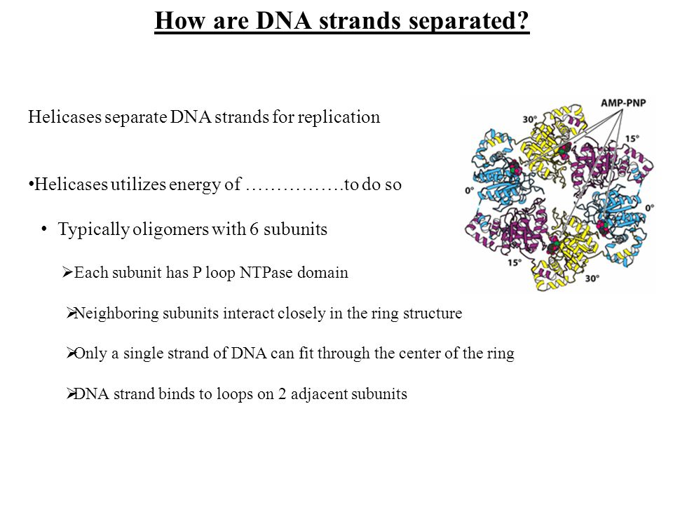 How are DNA strands separated