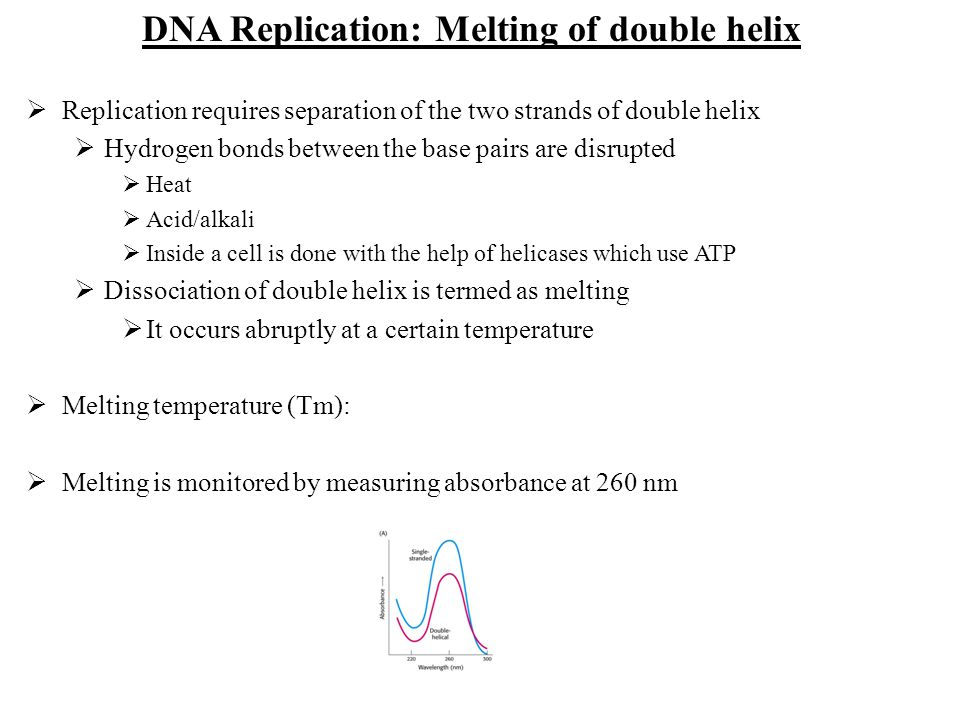 DNA Replication: Melting of double helix