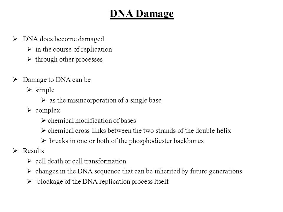 DNA Damage DNA does become damaged in the course of replication