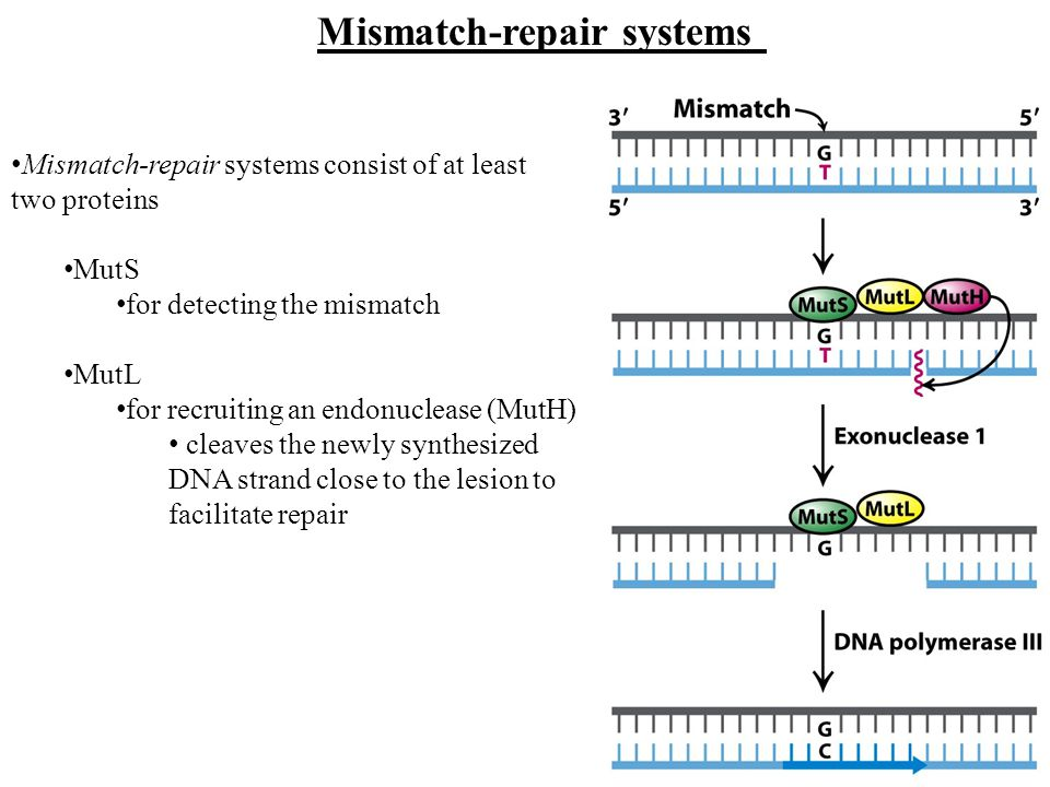 Mismatch-repair systems