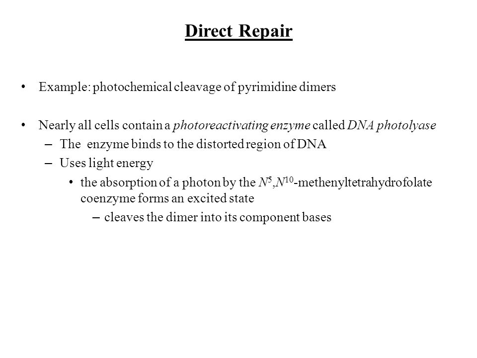 Direct Repair Example: photochemical cleavage of pyrimidine dimers