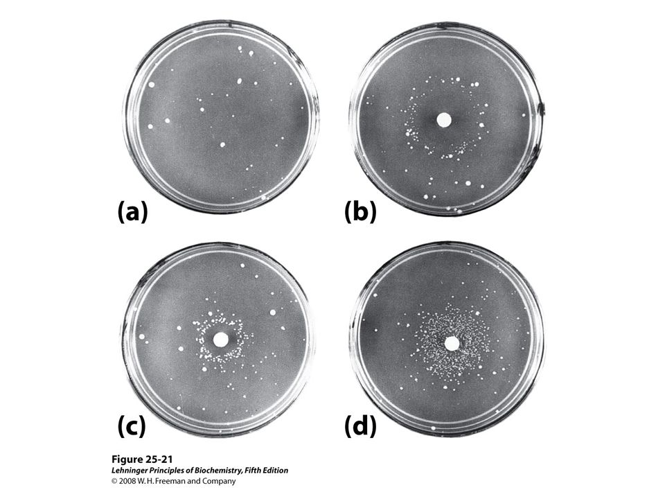 FIGURE 25-21 Ames test for carcinogens, based on their mutagenicity