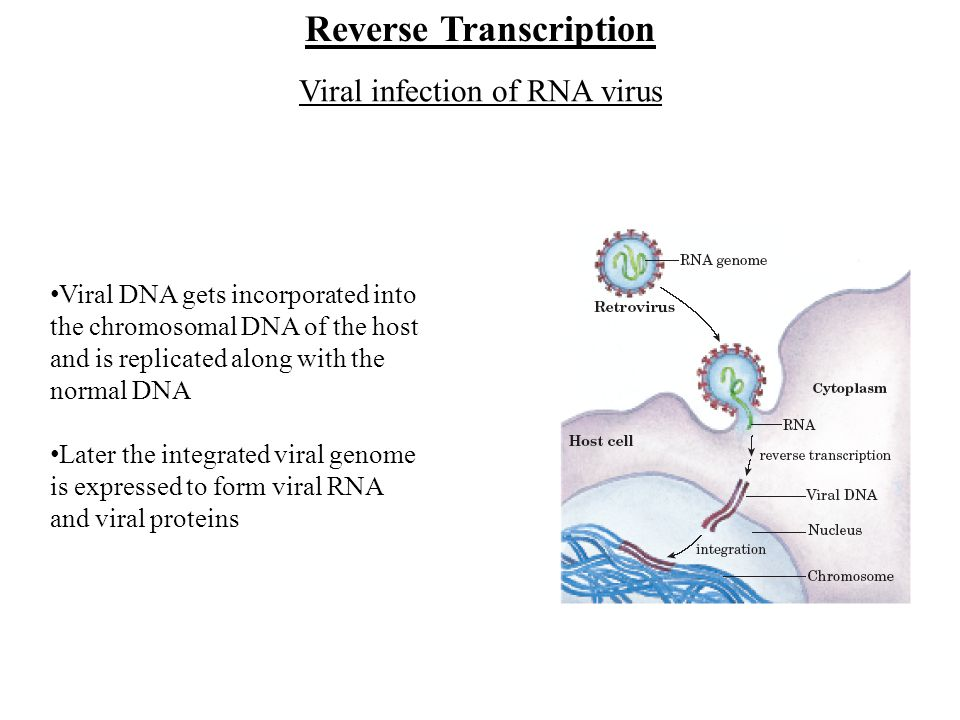 Viral infection of RNA virus