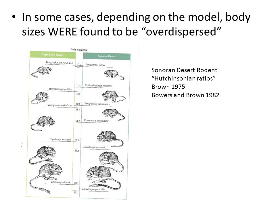 In some cases, depending on the model, body sizes WERE found to be overdispersed