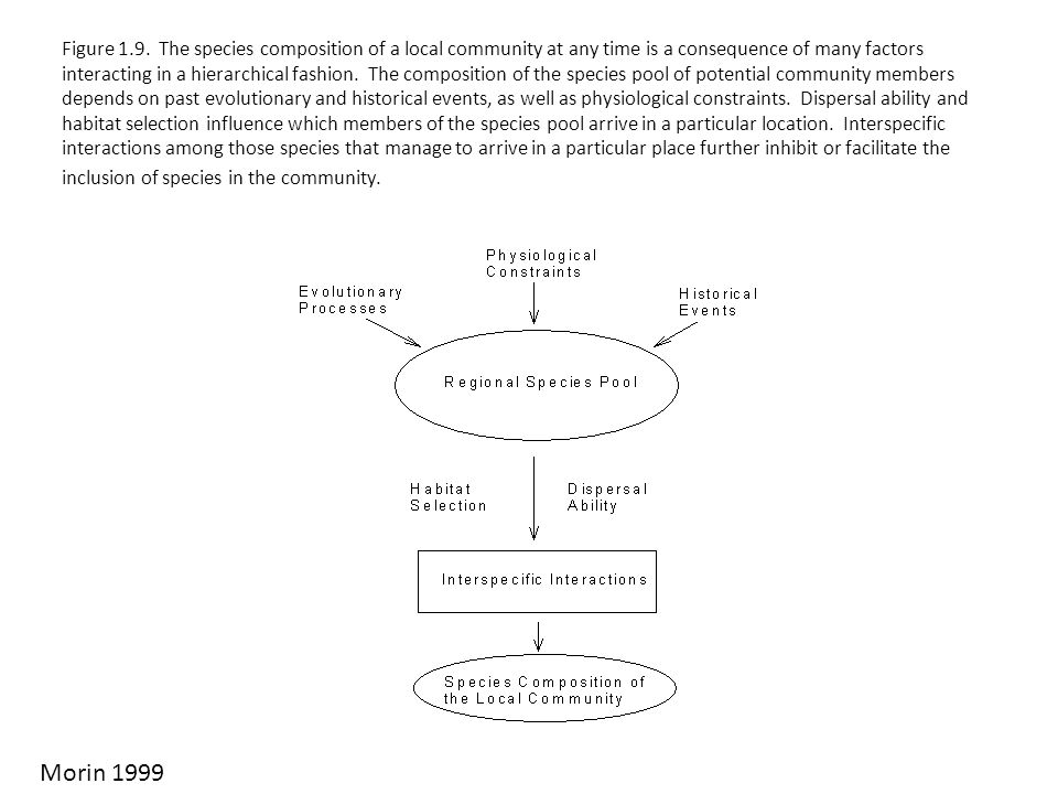 Figure 1.9. The species composition of a local community at any time is a consequence of many factors interacting in a hierarchical fashion. The composition of the species pool of potential community members depends on past evolutionary and historical events, as well as physiological constraints. Dispersal ability and habitat selection influence which members of the species pool arrive in a particular location. Interspecific interactions among those species that manage to arrive in a particular place further inhibit or facilitate the inclusion of species in the community.