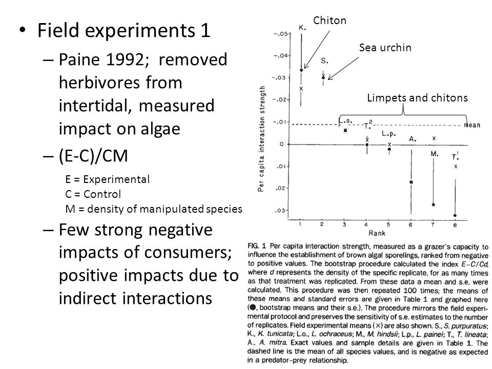 Chiton Field experiments 1. Paine 1992; removed herbivores from intertidal, measured impact on algae.