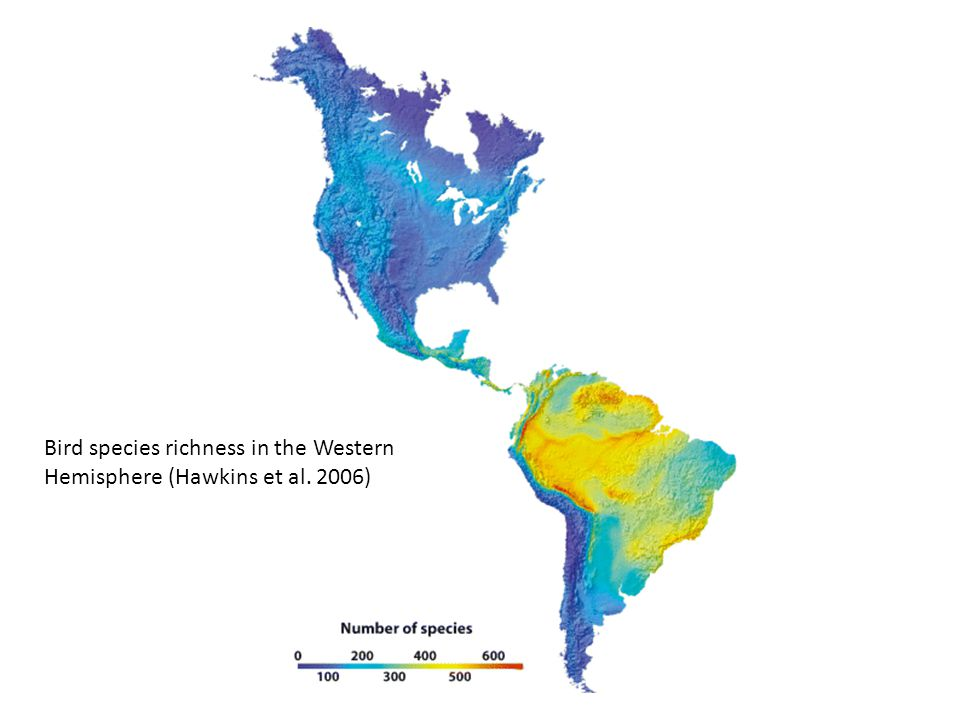 Bird species richness in the Western Hemisphere (Hawkins et al. 2006)