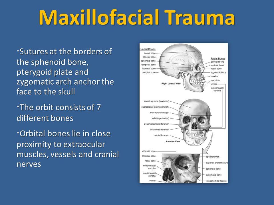 Maxillofacial Trauma ·The orbit consists of 7 different bones