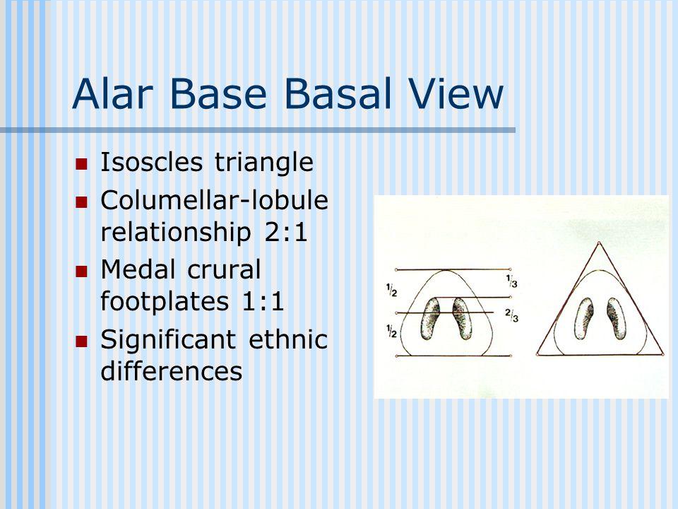 Alar Base Basal View Isoscles triangle