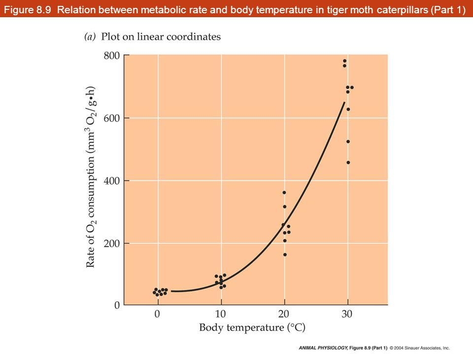 relationship between metabolic rate and body size of marilyn