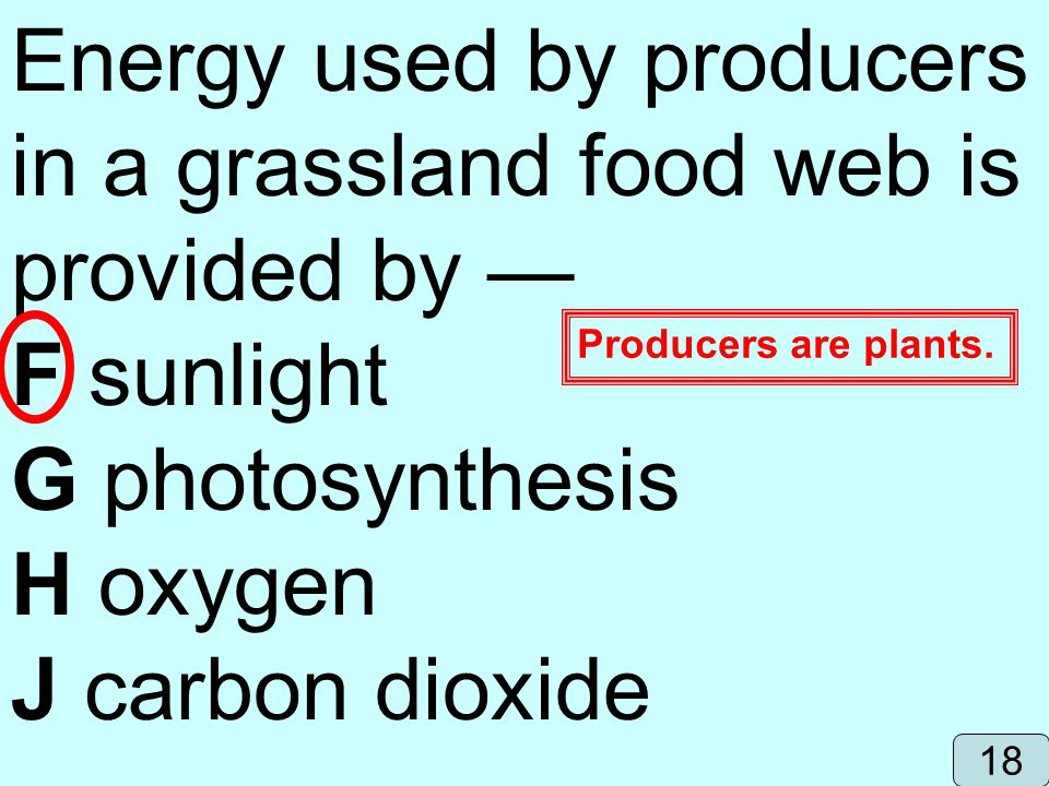 Energy used by producers in a grassland food web is provided by —