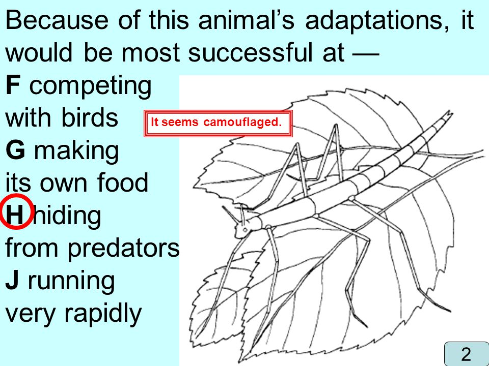 Because of this animal's adaptations, it would be most successful at —