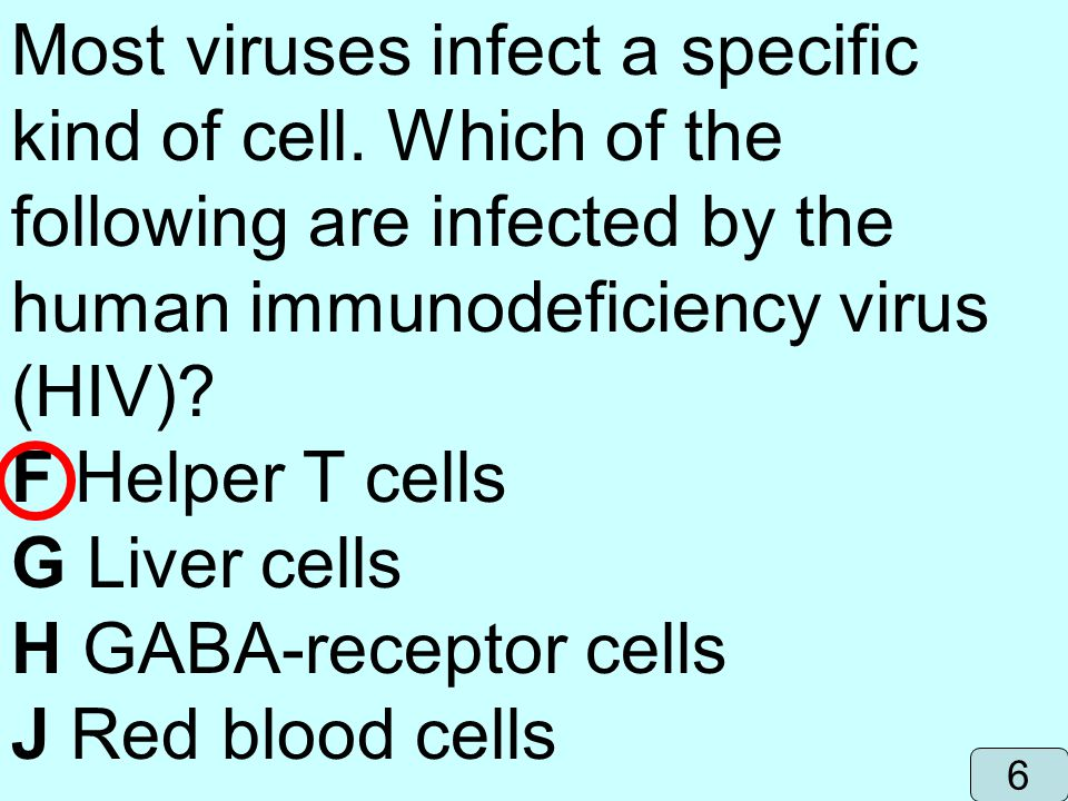 human immunodeficiency virus (HIV) F Helper T cells G Liver cells