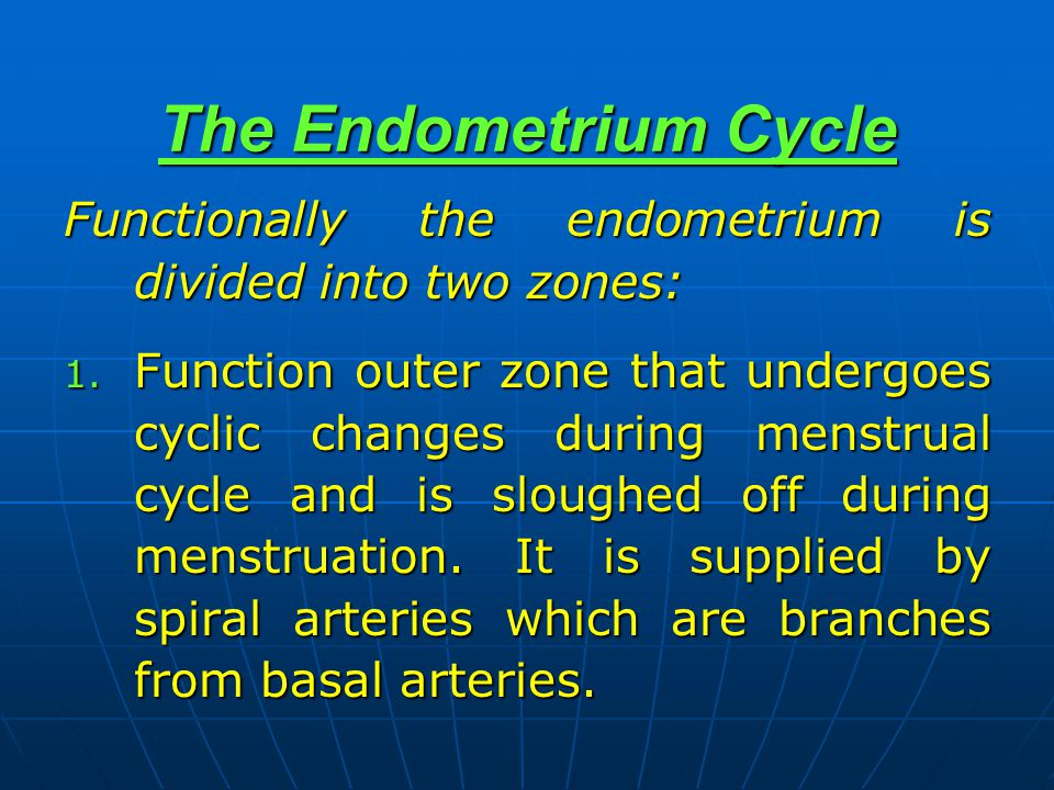 The Endometrium Cycle Functionally the endometrium is divided into two zones: