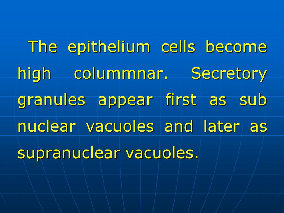 The epithelium cells become high colummnar