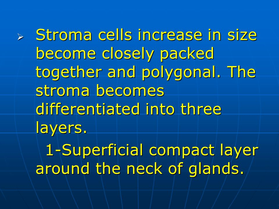 Stroma cells increase in size become closely packed together and polygonal. The stroma becomes differentiated into three layers.